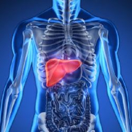 Artigo de especialista: Gordura no fígado: tratamento inclui dieta e medicamentos