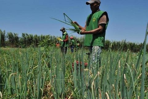 Brasil vai propor que países do G20 não aumentem subsídios agrícolas