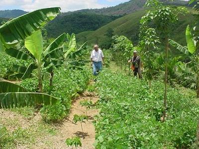 Manejo de pragas e produção orgânica são contrapontos ao uso de agrotóxicos
