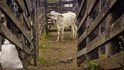 Filme que retrata a feira de gado de São Félix será lançado dia 11 em Salvador