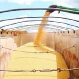 Pesquisa de perda no transporte de grãos está em andamento