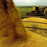Colheita chega a 10% das lavouras de soja do estado, segundo Aprosoja/MS