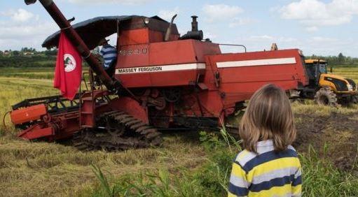 Como o MST se tornou o maior produtor de arroz orgânico da América Latina