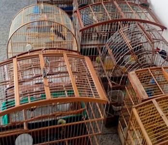 Pássaros vendidos ilegalmente são apreendidos em Juazeiro
