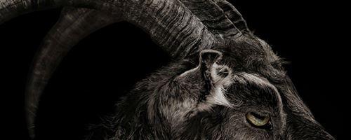 Cabra de A Bruxa aparece em Ao Cair da Noite
