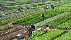 Agricultura influencia primeiro PIB positivo do Ceará em dois anos