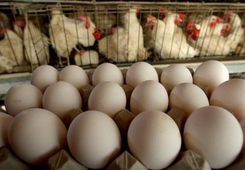 BRF assume compromisso para eliminar uso de ovos de galinhas confinadas em gaiolas