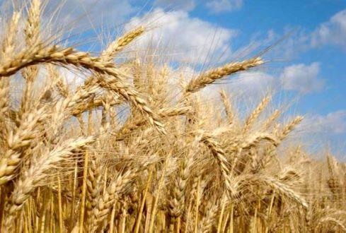 Calor e seca castigam safras de verão no Hemisfério Norte e causam escassez de alimentos