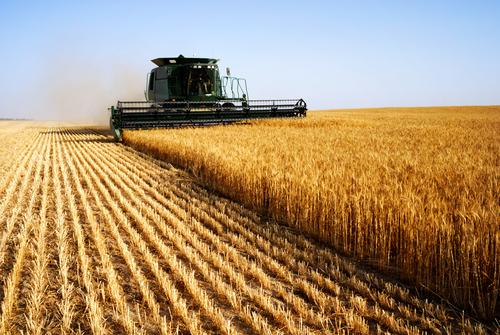 Governo cria política para elevar participação do Brasil no mercado agrícola mundial