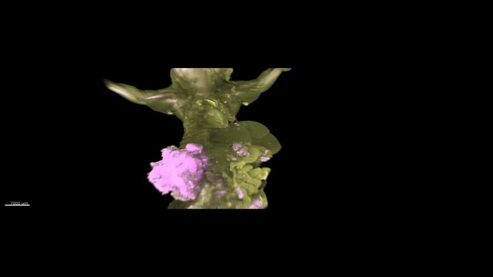 Imagens em 3D mostram com alta precisão como o câncer avança no corpo de um camundongo