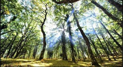 Floresta Umbra, na Itália, vira Patrimônio da Humanidade