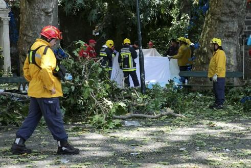 Queda de árvore deixa mortos e feridos em Portugal
