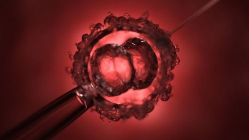 Doença genética de embrião são removidas com 'cirurgia química'