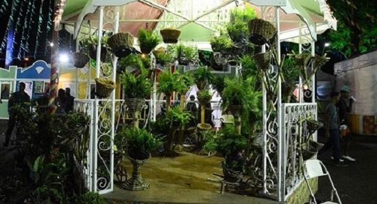 Mini-horto instalado na Expofeira  expõe cactos, samambaias e palmeiras