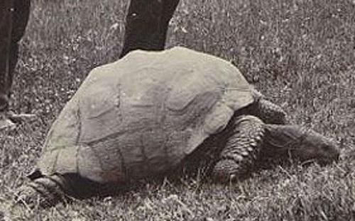 A tartaruga mais velha do mundo é gay