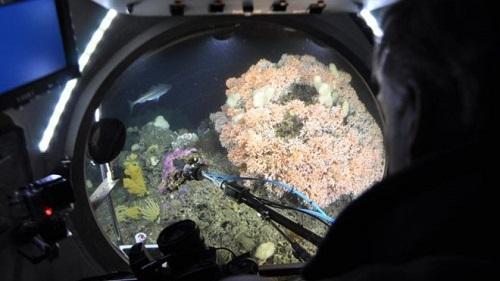 Poluição do ar acidifica oceanos e ameaça vida marinha