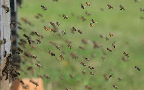 Estudo detecta queda preocupante na população de insetos voadores