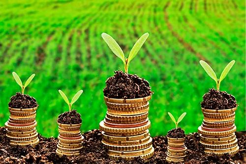 Caixa reduz taxa de juros do crédito rural para médios produtores rurais