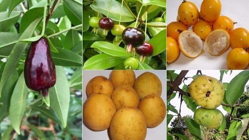 'Superfrutas' encontradas na Mata Atlântica que pesquisadores tentam salvar da extinção