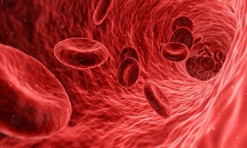 Cientistas encontram caminho para gerar novos vasos sanguíneos