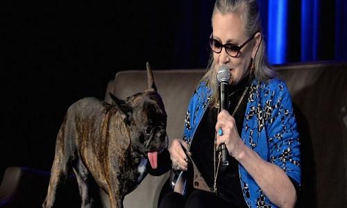 Star Wars-Os Últimos Jedi terá alienígena inspirado em cão de Carrie Fisher