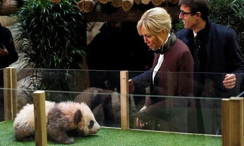 Brigitte Macron batiza primeiro panda nascido na França