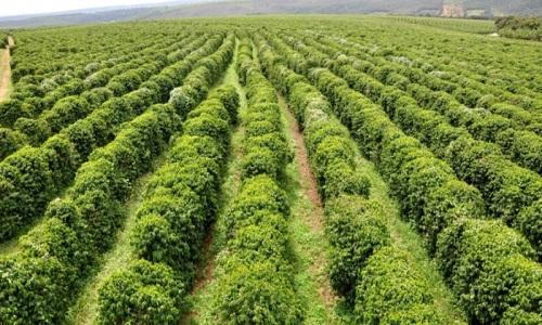 Nasa aponta que Brasil usa 7,6% do seu território com lavouras