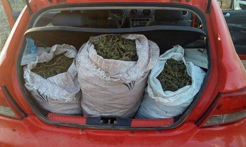 Trinta quilos de maconha são apreendidos em Curaçá