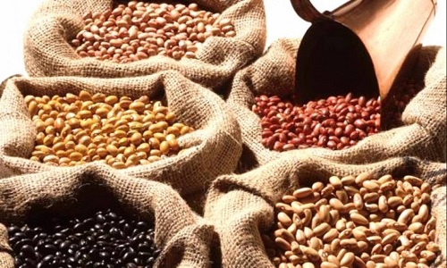 Safra de feijão começa com preços em baixa