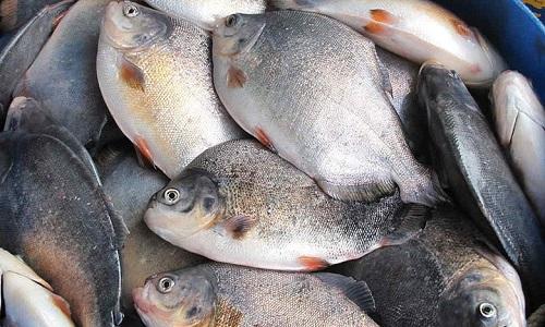 Relatório da UE suspende importação de pescados brasileiros