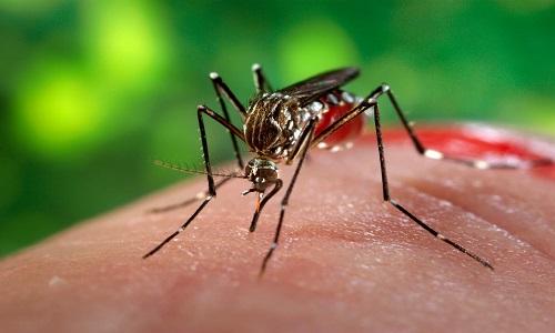 Chikungunya foi a doença transmitida pelo Aedes que mais matou em 2017