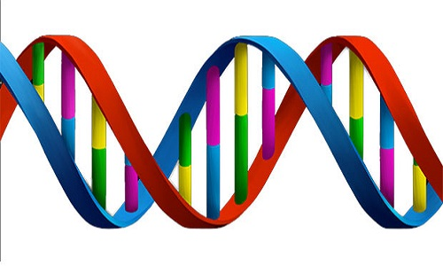 Cientistas descobrem 'arma' contra DNA danificado