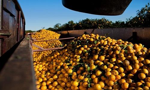 IEA divulga resultado final para Cana e Laranja e preliminares de grãos e frutas