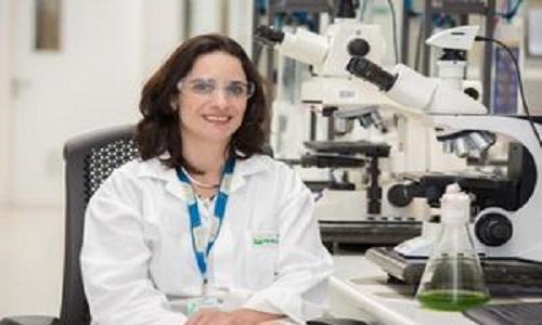 Petrobras estuda produzir biodiesel a partir de microalgas