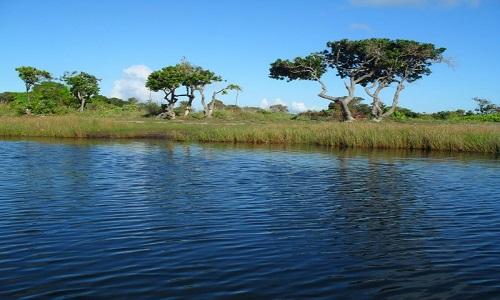 Corpo de nemino é achado às margens de rio em Camaçari