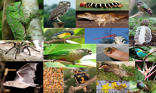 Declínio da biodiversidade em todo o planeta ameaça bem-estar da humanidade