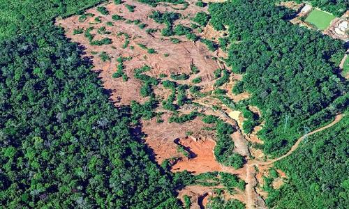 Nos últimos anos, a produção de soja na amazônia avançou sem causar desmatamento