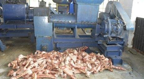 Mapa abre consulta para normatizar destino de carcaças de suínos e aves