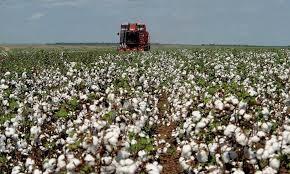 A Produção Agropecuária de 2018 é estimada em R$ 530,1 bilhões