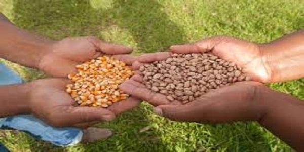 Prefeitura vai distribuir sementes para safra de inverno na próxima semana