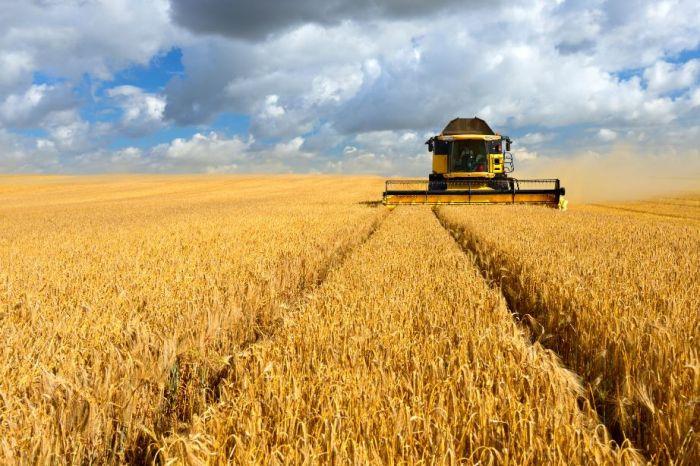 Novo seguro Agrícola para Cevada