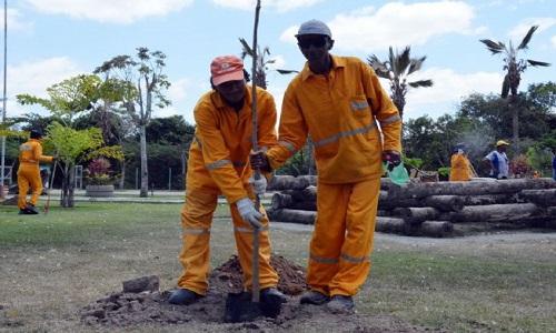 Dia mundial do Meio Ambiente e comemorado com o plantio de arvore no Anel de Contorno