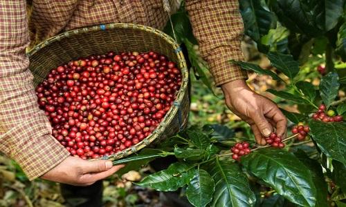 Café: um setor anticrise