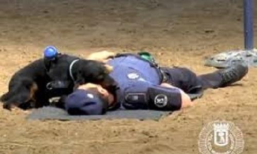 Polícia de Madri ensina Cachorro á fazer massagem cardíaca