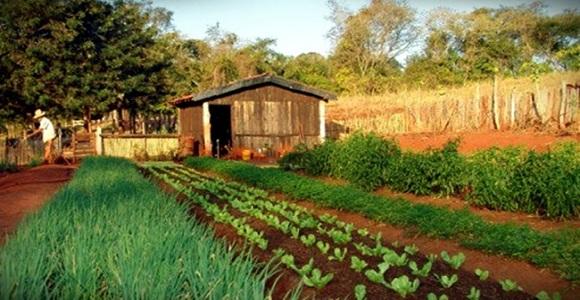 Qual a diferença entre o produto orgânico e o agroecológico?
