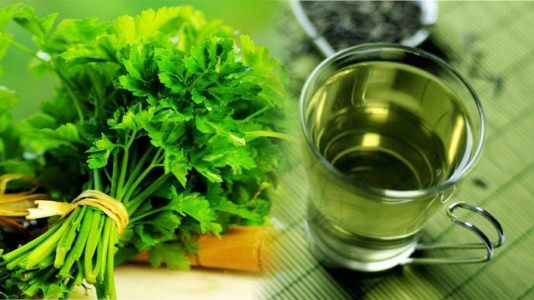 Chá de salsa: Benefícios para saúde e emagrecimento