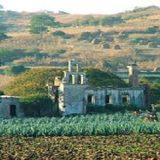 Brasil busca experiência mexicana em política agrícola