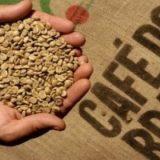Brasil deverá atingir produção recorde de café com 60 milhões de sacas