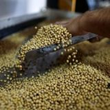 Plantio de soja no Brasil atinge 20% e já é o mais rápido da história,