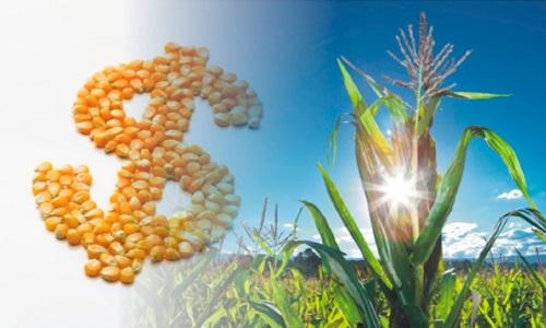 Contratação de crédito rural até outubro soma R$ 64 bilhões